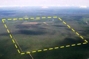 planejamento 300x200 - Planejamento Florestal
