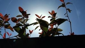 selecao 300x169 - Processo Produtivo de mudas de eucalipto