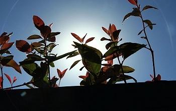 Processo Produtivo de mudas de eucalipto